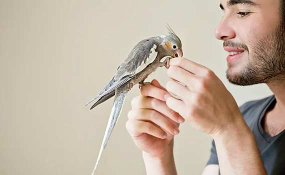 Happy young man with beard holding pet bird Animal General Cranberry Township